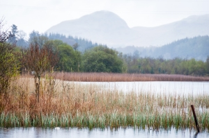 Shrouded in misty rain, Dumgoyne rises in the distance above the waters of Craigallian Loch.