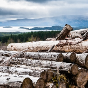 Forestry works along the West Highland Way above Loch Lomond.